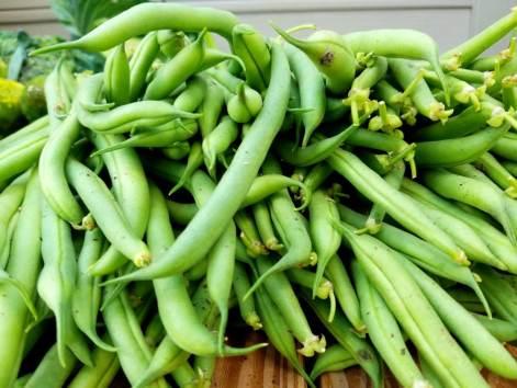Green Beans American